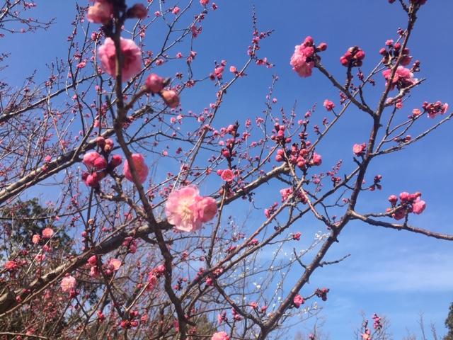 もうすぐ春。